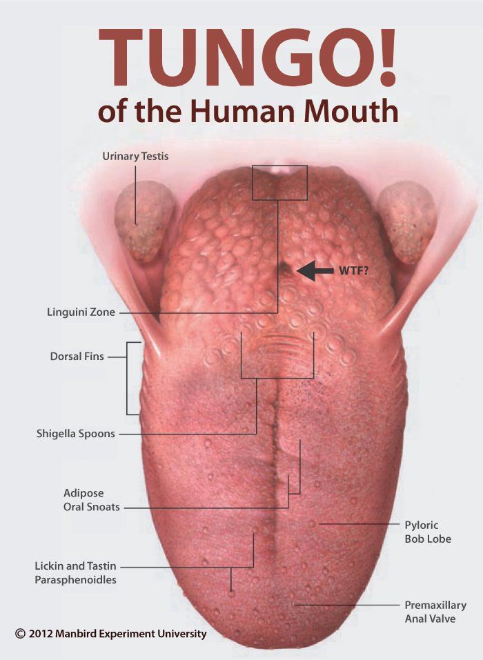 Tungo Of The Human Mouth